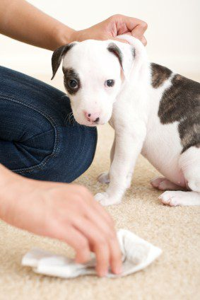 puppy_ADMIN_Jul-29-112149-2016_Conflict
